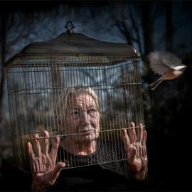 Bird cage 4 K