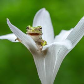 Happy frog 4 K
